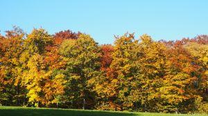 Herbstimpressionen Villigst 2015 2